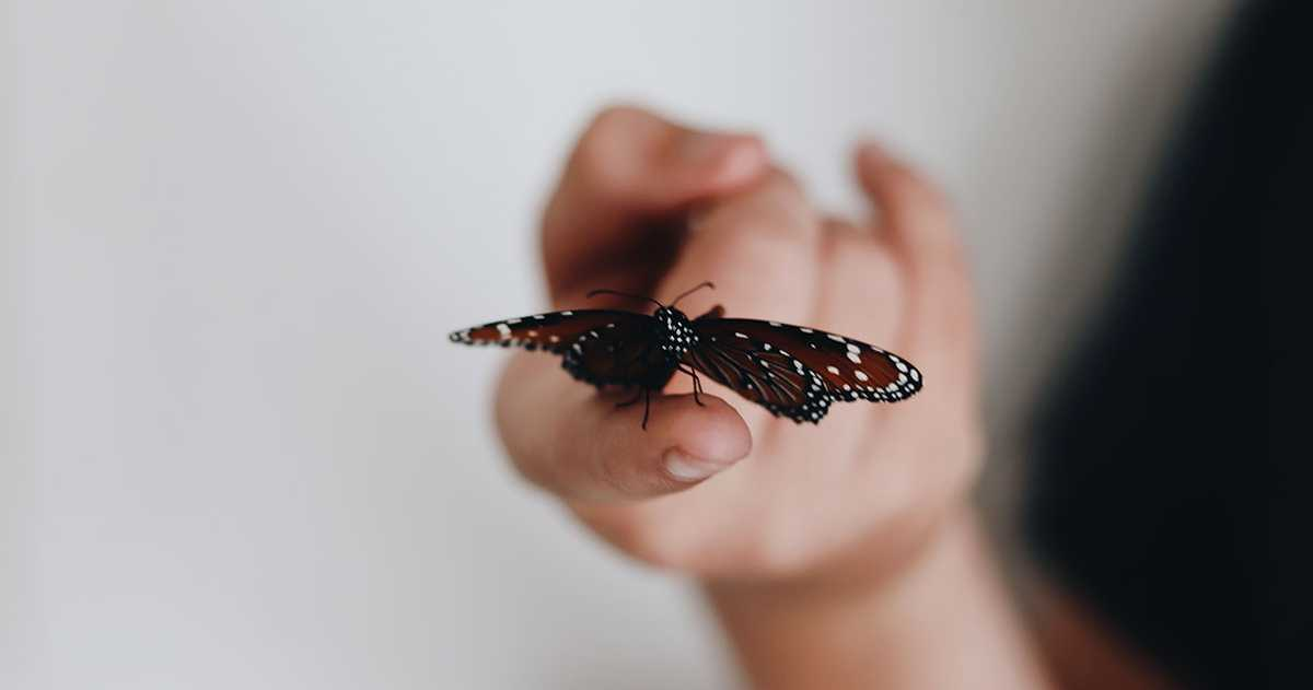 Closeup of a butterfly sitting on the tip of the someone's index finger